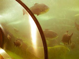 Faunia animal park big fish tunnel