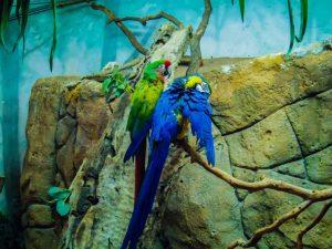 Faunia animal park exotic birds
