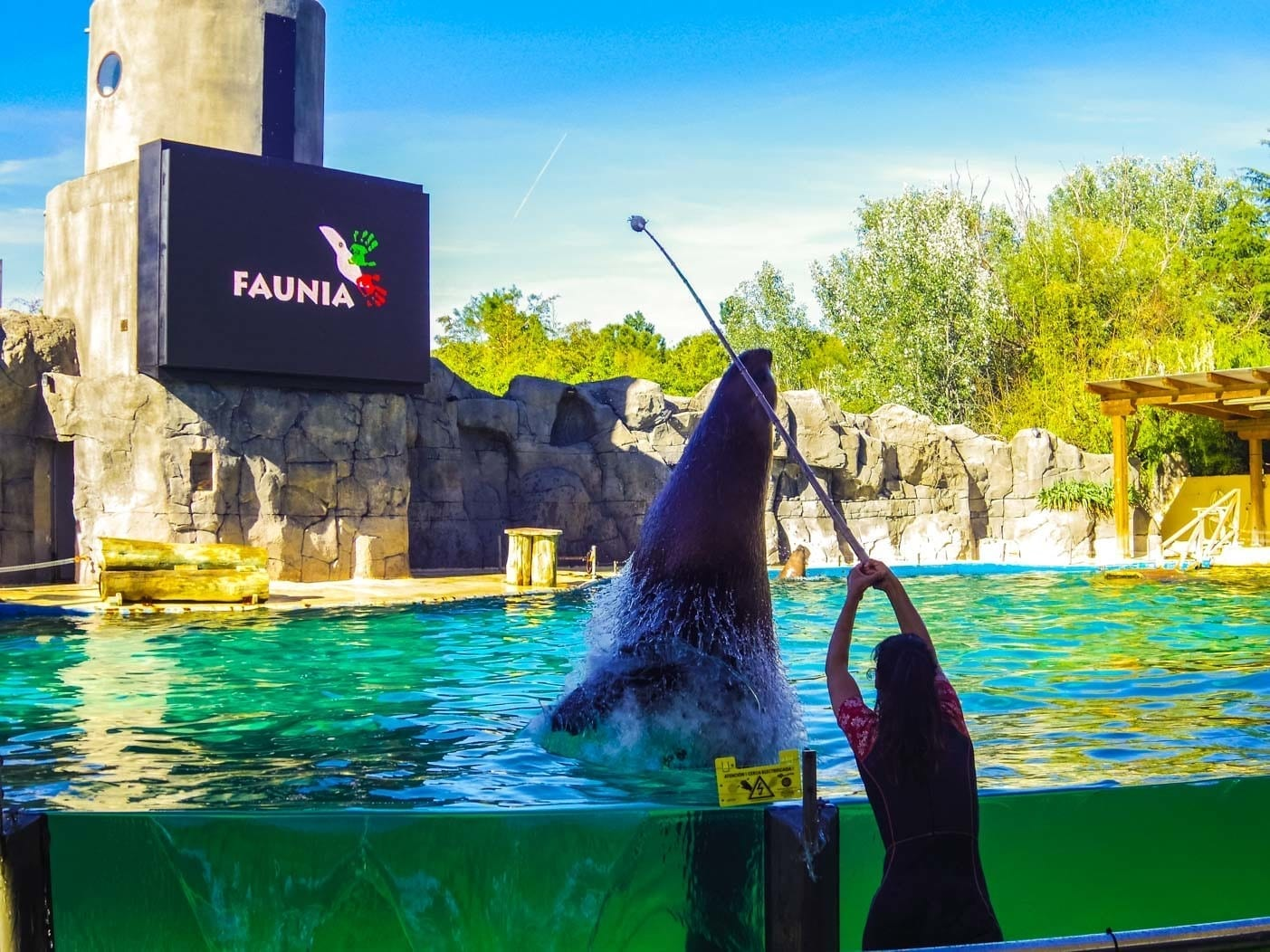 Faunia animal park sea bear jump