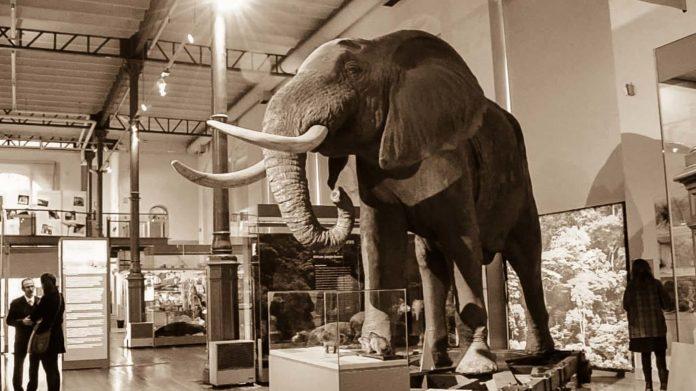 Madrid Museum of Natural Science elefant hall