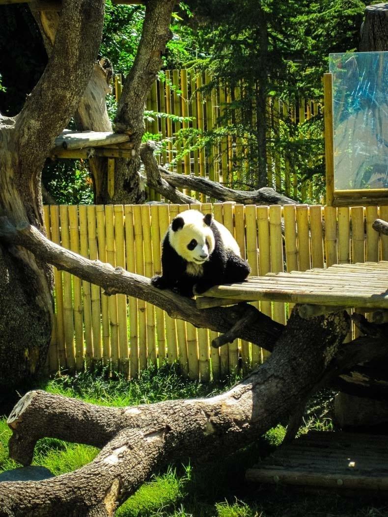 Madrid Zoo Aquarium park